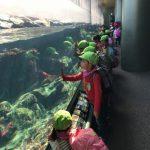 「アクアワールド・茨城県大洗水族館」に行ってきました。